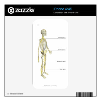 The Nervous System Decal For The iPhone 4