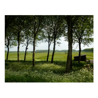 The Netherlands Countryside Postcard