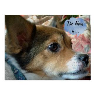 The News Dog Postcard