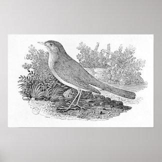 The Nightingale Print