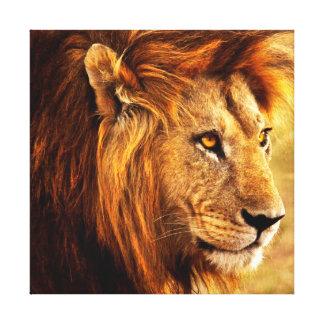 The Noble Lion Photograph Canvas Print