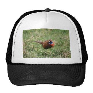 The Noisy Pheasant Hats