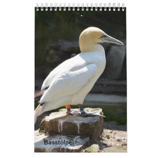 The northern gannet as calendars