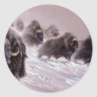 The northlands, Musk Ox Classic Round Sticker