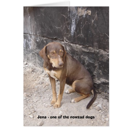 The Nowzad Dogs greeting card
