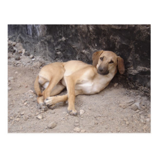 The Nowzad Dogs postcard RPG