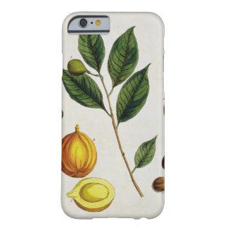 The Nutmeg, plate 353 from 'A Curious Herbal', pub Barely There iPhone 6 Case