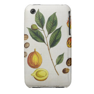 The Nutmeg, plate 353 from 'A Curious Herbal', pub iPhone 3 Case-Mate Case