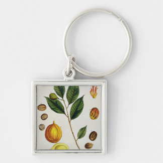 The Nutmeg, plate 353 from 'A Curious Herbal', pub Keychain