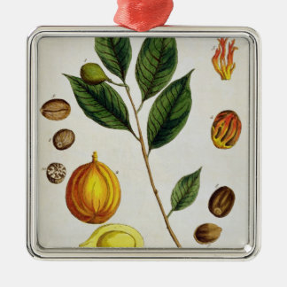 The Nutmeg, plate 353 from 'A Curious Herbal', pub Metal Ornament