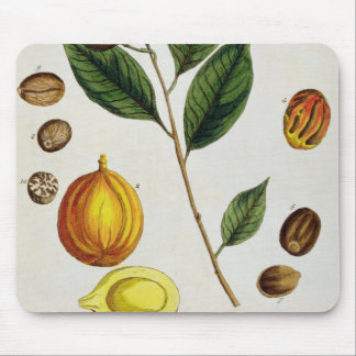 The Nutmeg, plate 353 from 'A Curious Herbal', pub Mouse Pad