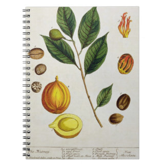 The Nutmeg, plate 353 from 'A Curious Herbal', pub Spiral Note Book