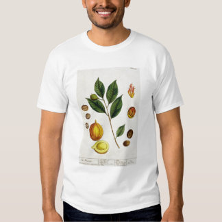 The Nutmeg, plate 353 from 'A Curious Herbal', pub T-shirt