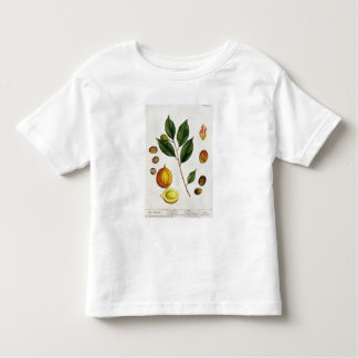 The Nutmeg, plate 353 from 'A Curious Herbal', pub Toddler T-shirt