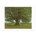 The Oak of Flagey, called Vercingetorix Postcard