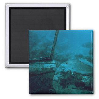 The Ocean Floor 2 Inch Square Magnet