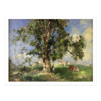 The Old Ash Tree (oil on canvas) Postcard