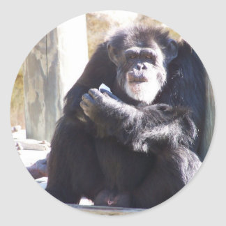 the old chimp classic round sticker
