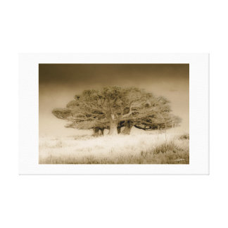 THE OLD LONELY TREES - Canvas print