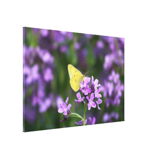The One That Stands Out Butterfly Photography Art Stretched Canvas Print