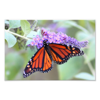 The Open One Butterfly Photography Photographic Print