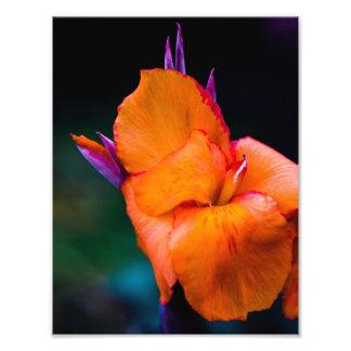 The Orange Crane Flower Photo Print