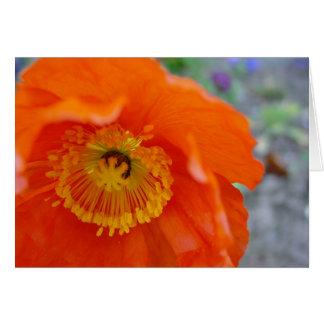 The Orange Flower Card