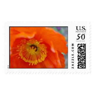 The Orange Flower Postage