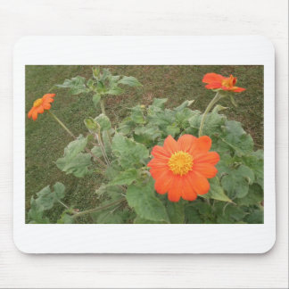 The Orange Mexican Flowers Mouse Pad