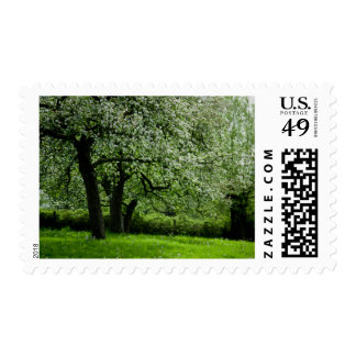 The Orchard Stamp