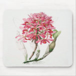 The Orchid - bring some femininity to your home Mouse Pads