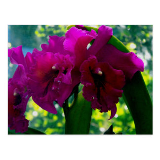 The Orchid Postcard