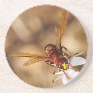 The Oriental Hornet Vespa Orientalis Drink Coaster