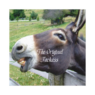 The Original Jackass Funny Donkey Mule Farm Animal Stretched Canvas Prints