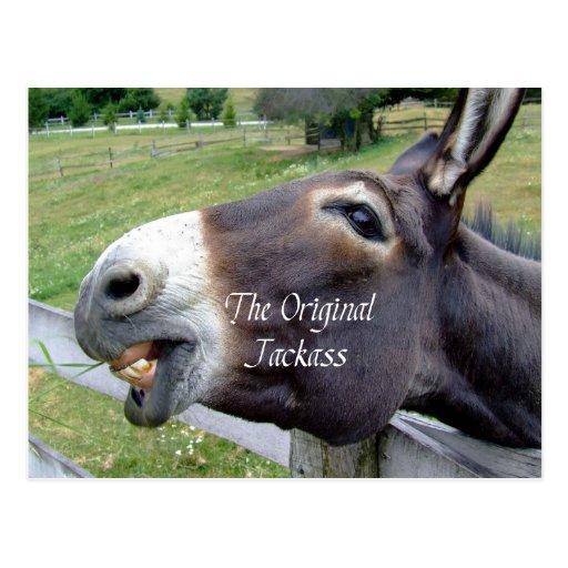 The Original Jackass Funny Donkey Mule Farm Animal Postcard