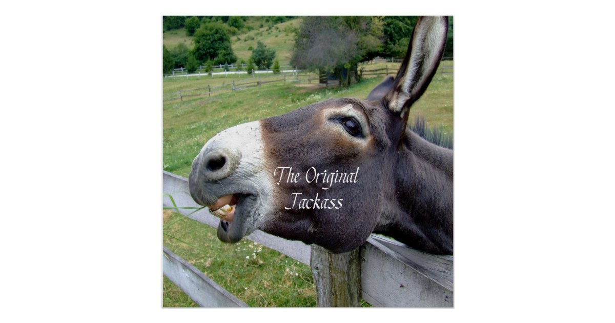 The Original Jackass Funny Donkey Mule Farm Animal Poster
