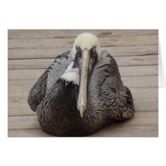 The Ornery Pelican Card