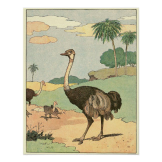 The Ostrich Storybook Illustration Poster