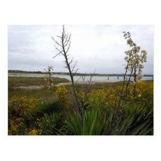 The Other Side of Oak Island Postcard