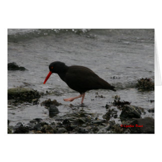 The Oystercatcher Card