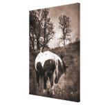 The Paint Stretched Canvas Prints