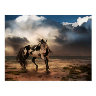 The Painted Pony Postcard