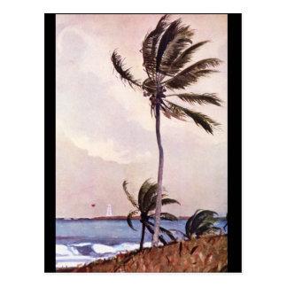 The Palm Tree, Nassau',_Landscapes Postcard