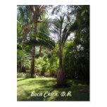 The Palms of Boca Chica Postcard