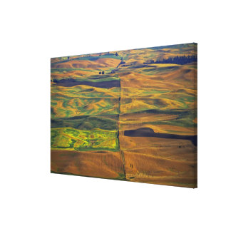 The Palouse from Steptoe Butte, Colfax, Stretched Canvas Print