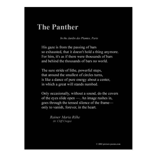 THE PANTHER POSTCARD