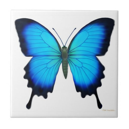 The Papilio Ulysses Butterfly Tile