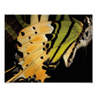 The Papilionidae - Butterfly Poster