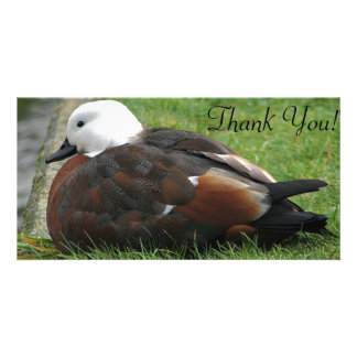 The Paradise Shelduck Sitting By Water's Edge Card