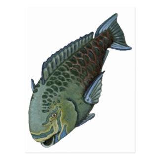 THE PARROT FISH POSTCARD